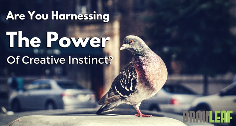 Are You Harnessing the Power  of Creative Instinct?