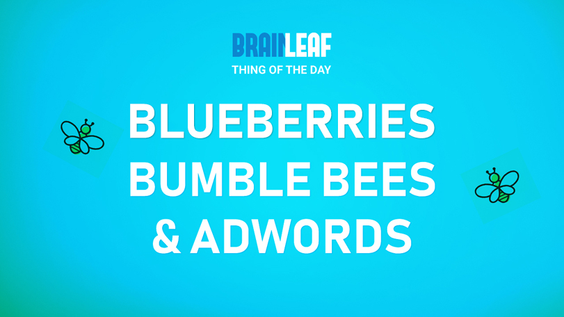 Blueberries, Bumblebees, and Adwords